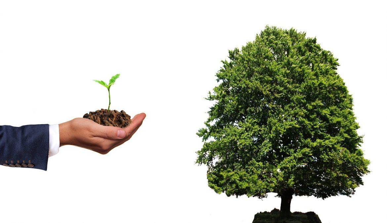 tree investing