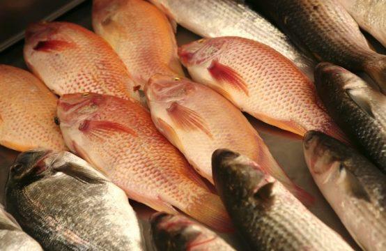 חנות דגים טריים מייבוא ומדגה מקומית למכירה באזור השרון