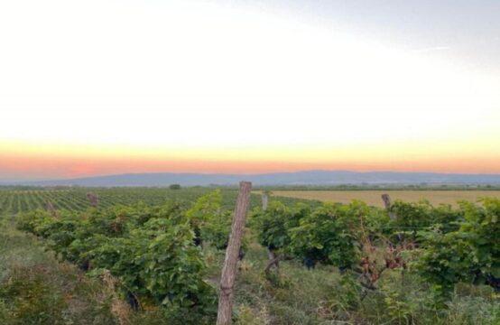 נכס להשקעה בגיאורגיה, מתוחזק היטב מלא בשדות ענבים – עם תשואה אטרקטיבית 25% למשקיע